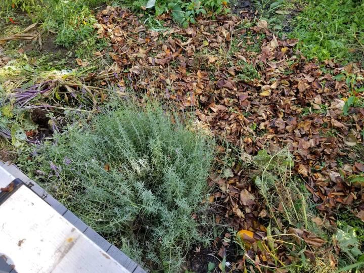 Lasagna Gardening and Composting throughwinter