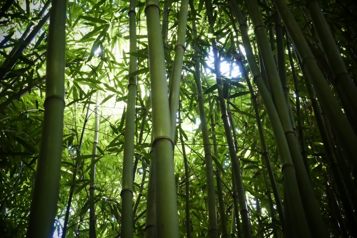 Bamboo Forest on the Pipiwai Trail, MauiHawaii