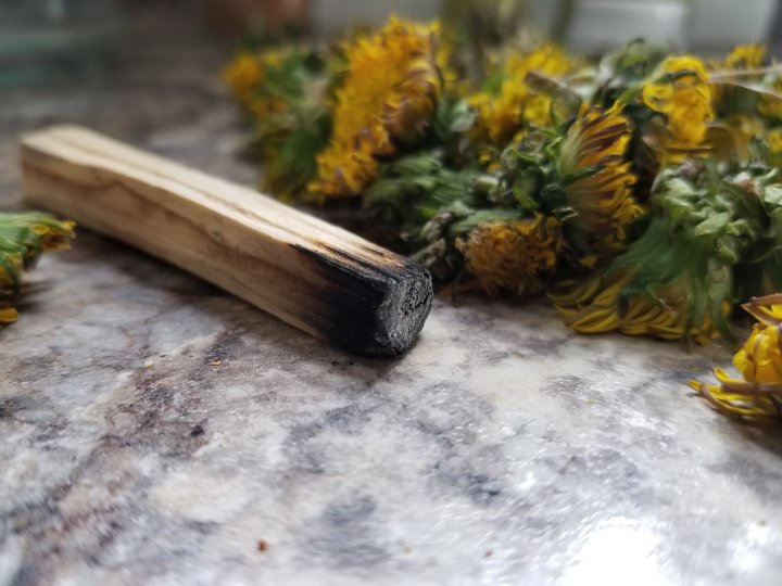 The Benefits of Burning Palo Santo